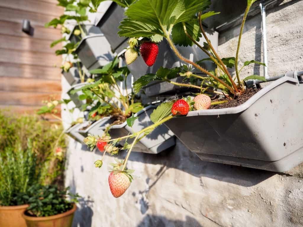 How to Start Your Vertical Gardening Adventure