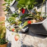 How to Start Your Vertical Gardening Adventure