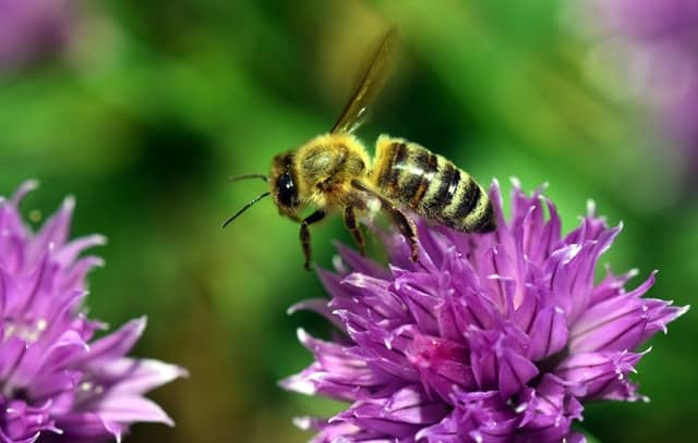 Tips for Adding Bee Balm to Your Garden