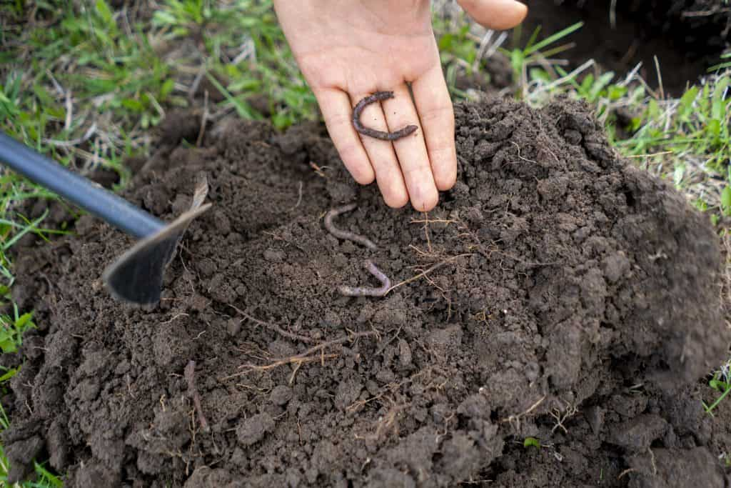 Earthworms and How they Help Your Garden