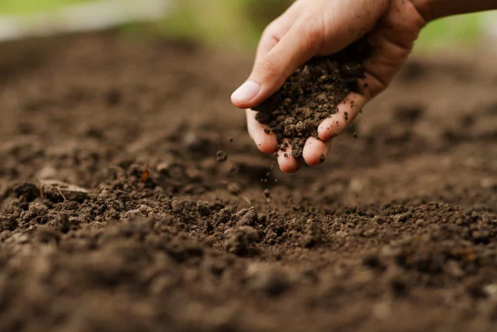 Fixing Acidic Soil and Adjusting PH in Your Garden