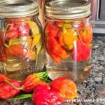How to Pickle Scorpion Peppers