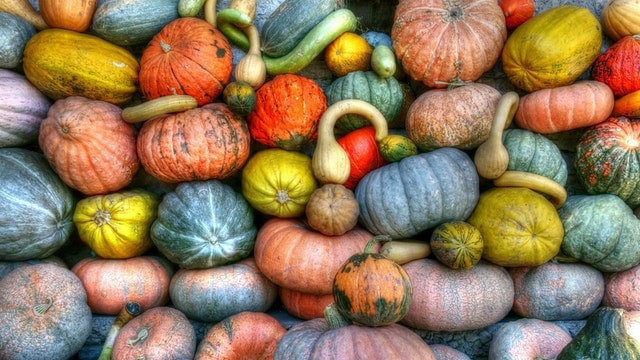 Easy Squash Recipes to Try this Fall