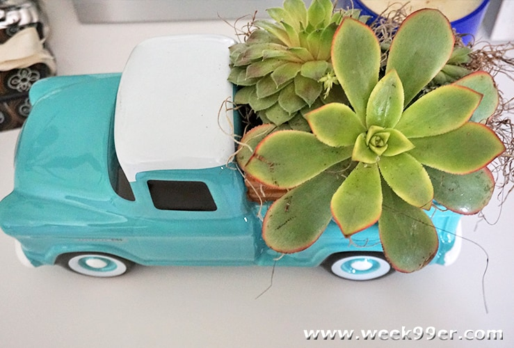 Teleflora Succulent Arrangement Review