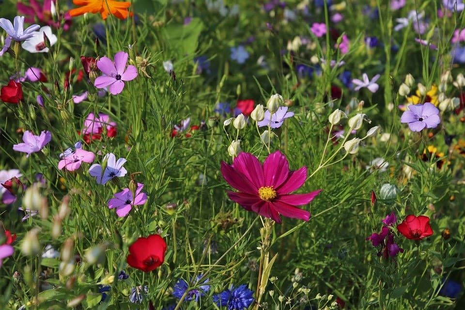 From Tired to Tidy: Ways to Reinvigorate Your Garden