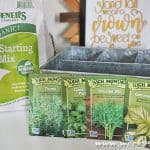Get Fresh Herbs Year Round with this At Home Kit