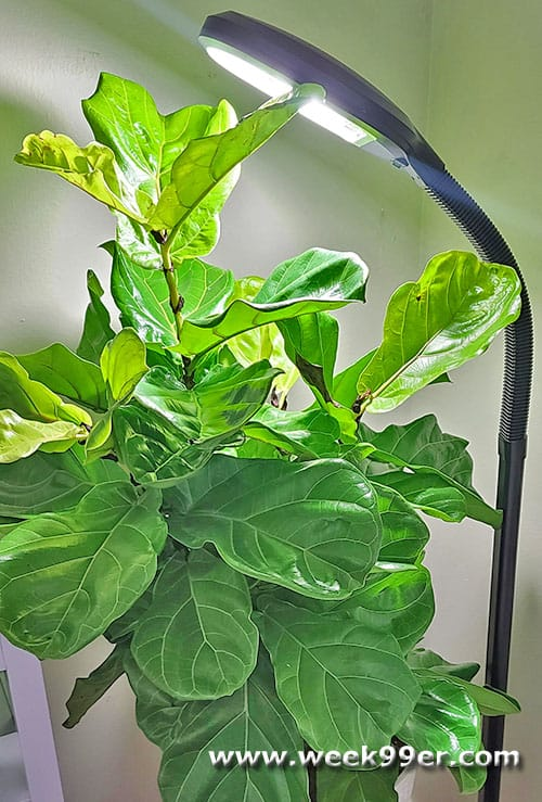 House Plant Grow Light Review