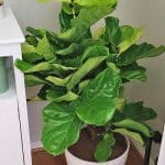 How to Get Your Dream Plant Delivered to Your Door