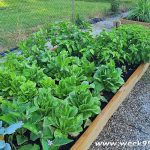 How to Build Your Own Raised Garden Bed to Grow All Season