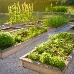 Tips for an Organized Garden