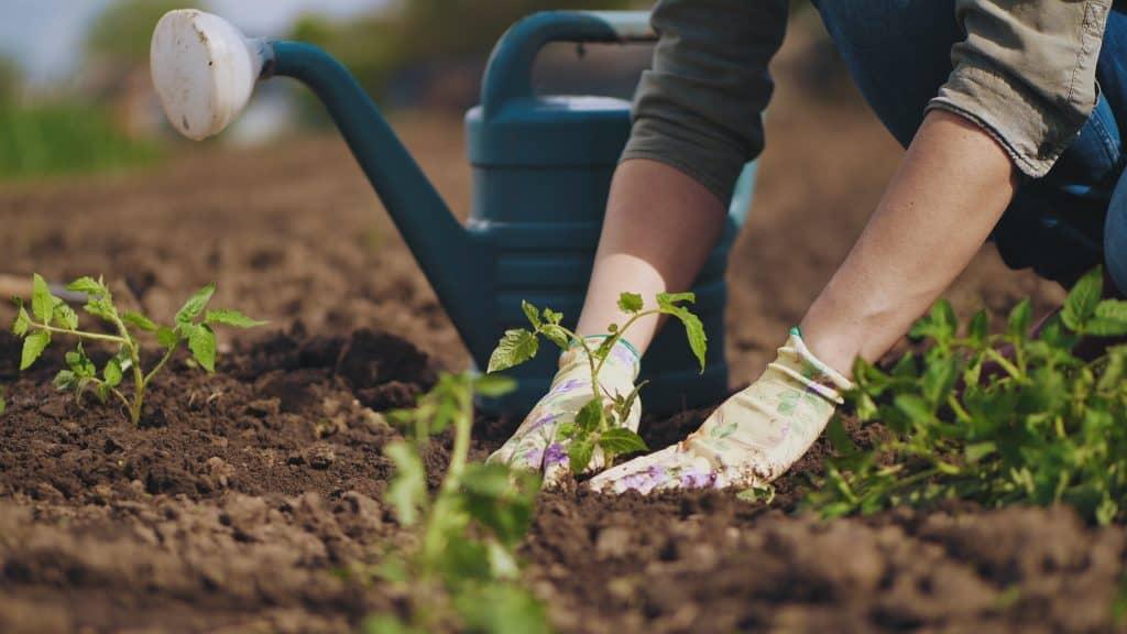 Easy Guide for Beginners Vegetable Garden