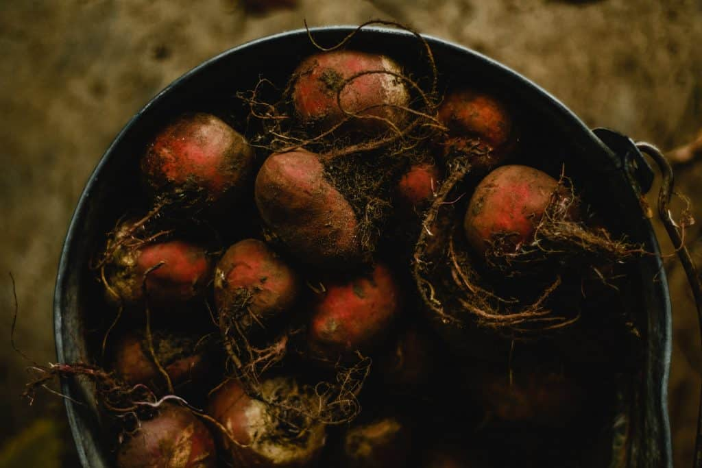It's Time to Plant Your Beets!