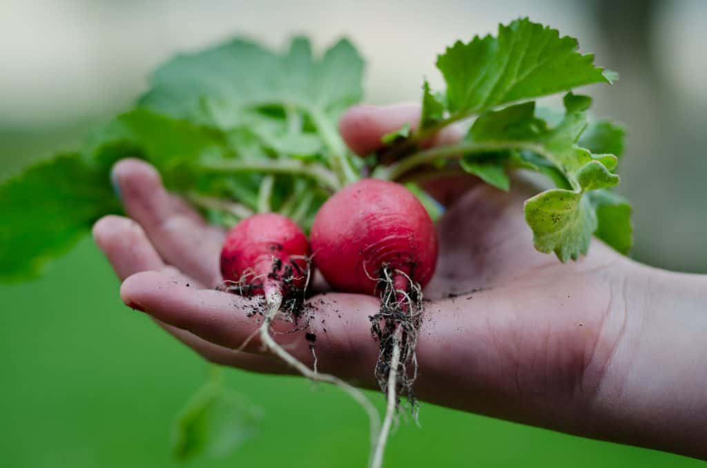 Great Vegetables to Grow in Your Spring Garden