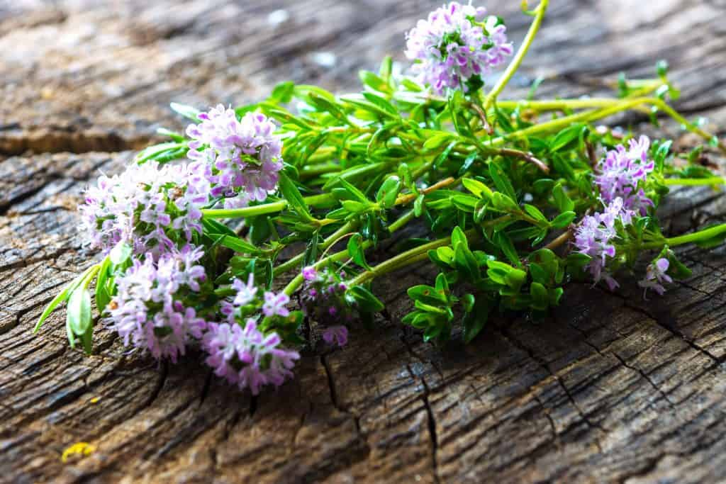 How to Grow and Contain Summer Savory