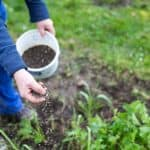 Making Your Own Organic Fertilizer