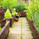 Tips for Maintaining Your Garden All Summer